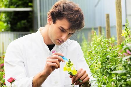 科学家在花园里观察花朵图片
