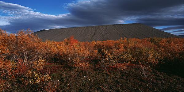 火山口底部生长的树木图片