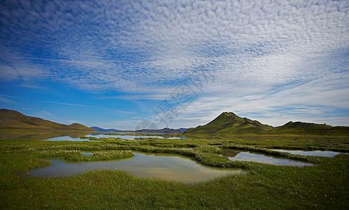 乡村景观中的草沼泽图片
