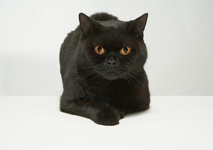 黑猫画像图片