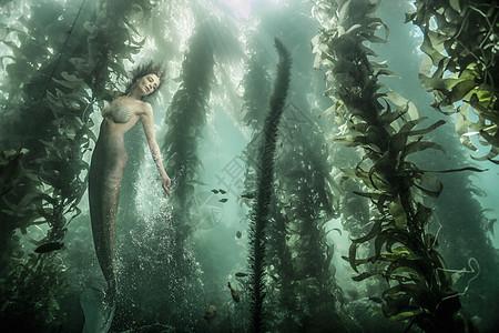 海带森林中美人鱼的水景图片