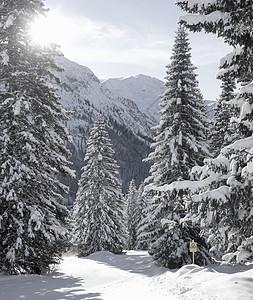 奥地利莱赫雪盖冷杉图片