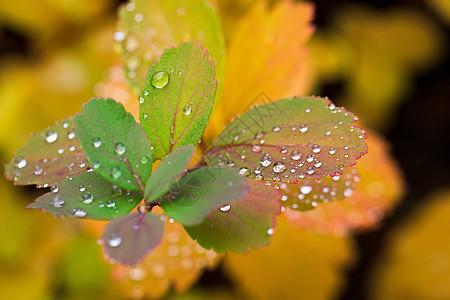 叶子上水滴的特写图片