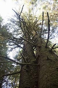 美国俄勒冈州乌普夸州立公园的树图片