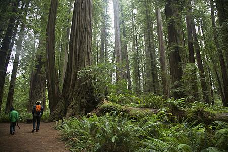 美国加利福尼亚州红杉国家公园的父子图片