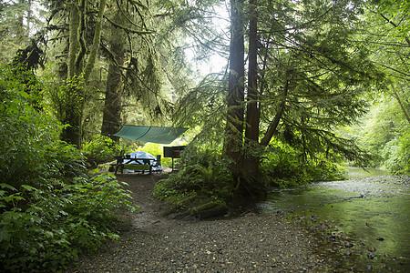 美国加利福尼亚州红杉国家公园营地图片