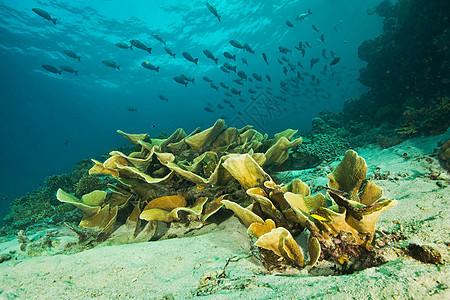 海洋植物和海床图片