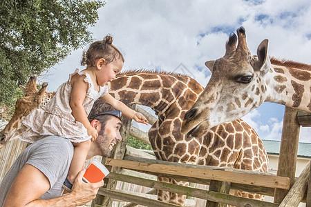 在动物园里,父亲肩上的小女孩正在喂长颈鹿图片