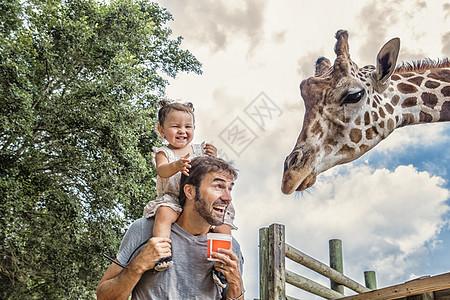 在动物园里,父亲肩上咯咯笑着的小女孩正在喂长颈鹿图片