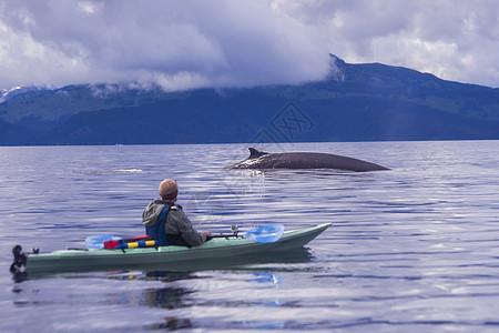 美国阿拉斯加州科迪亚克雄性皮划艇观赏鳍鲸图片