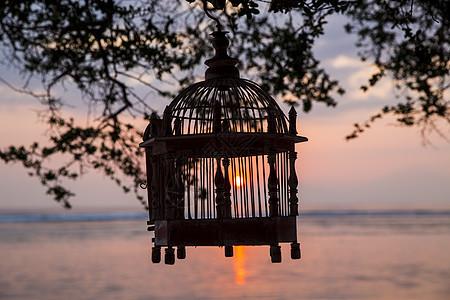 印度尼西亚日落时挂在树上的空鸟笼图片