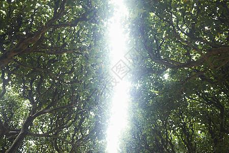 法国巴黎植物园低角度仰拍图片