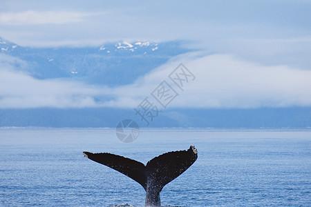 大海里鲸鱼的尾巴图片