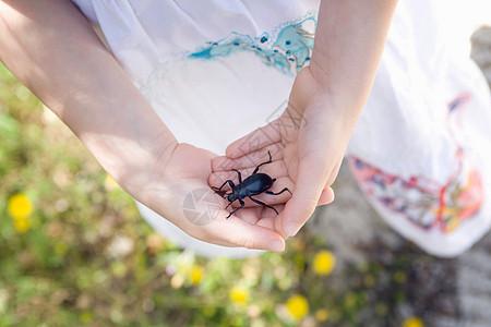 手上拿着甲虫的小女孩图片