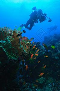 潜水员拍摄珊瑚礁图片
