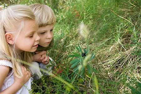 一对兄妹看着一只甲虫图片