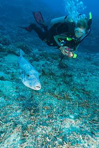 潜水员在水下欣赏河豚鱼图片