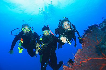 潜水员在珊瑚礁游泳图片