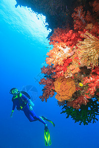潜水员在珊瑚礁中游泳图片