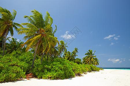 马尔代夫Huvadu环礁南部Baughagello岛图片