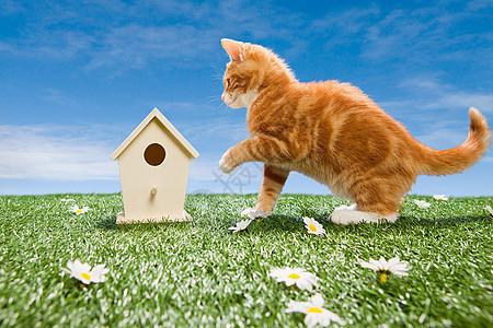 小猫和鸟屋图片