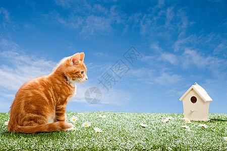 看着鸟屋的小猫图片