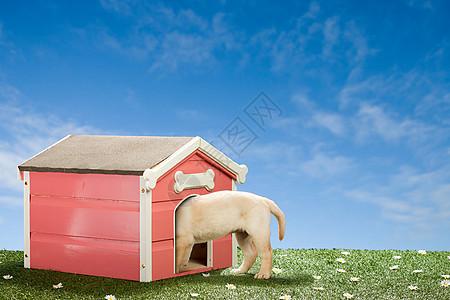 拉布拉多小狗的狗窝图片