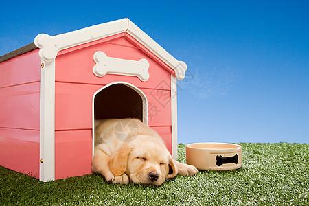 小狗在狗窝里睡觉图片