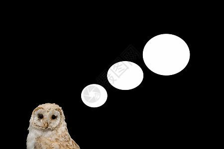 猫头鹰发出的言语气泡图片