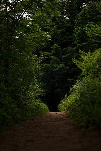 空林路径图片