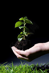 土壤和树苗保育员图片