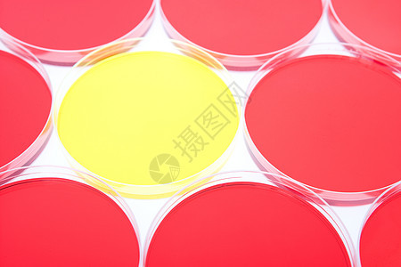 红色中间的黄色培养皿图片