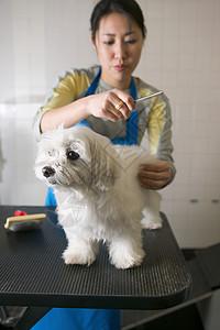 给狗梳毛的女人图片