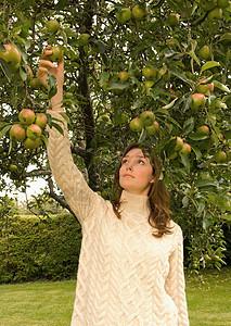 摘苹果的女孩图片