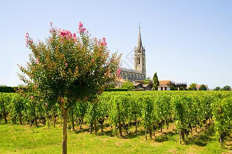 法国阿奎坦波美罗的葡萄园图片