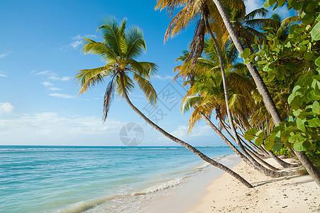 海滩和海洋图片