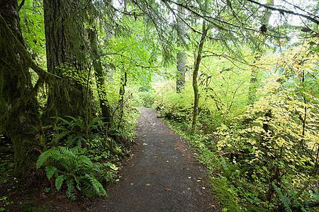 穿过银瀑布国家公园的小路图片