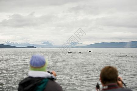 观看座头鲸的人图片