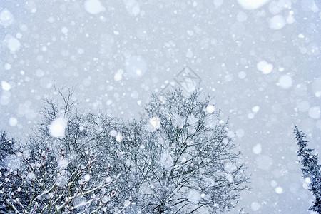 被雪覆盖的树图片