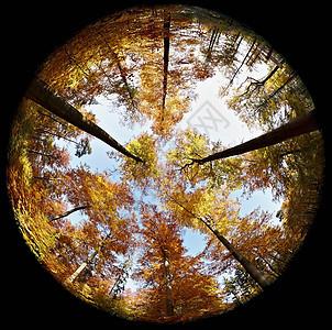 秋季森林鱼眼图图片