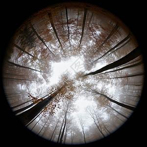 雾中秋林鱼眼图图片