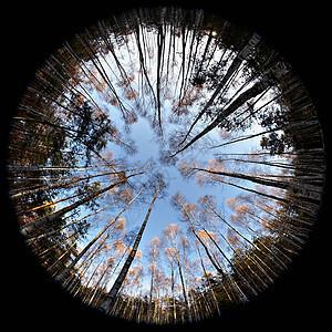 森林鱼眼图图片