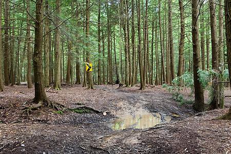 森林中树上的箭头标志图片