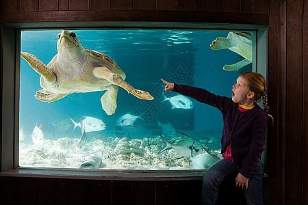 在水族馆里指着海龟的女孩图片