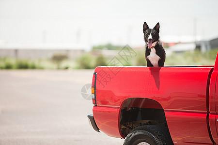 红色卡车上的狗图片