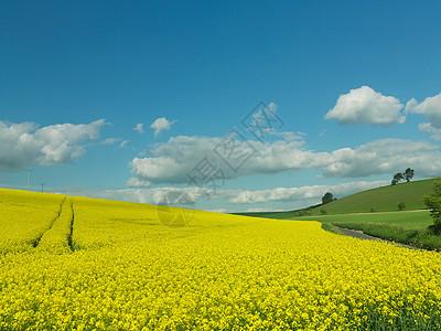 乡村景观中的菜籽田图片