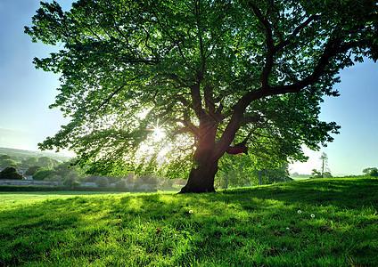 阳光明媚的树图片