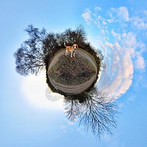 公园里的小猎犬360度全景图片