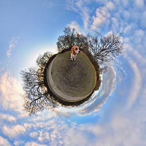 公园里的小猎犬360视角图片