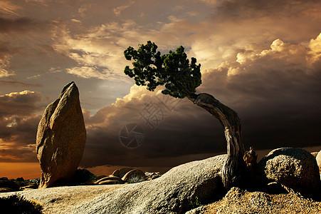 美国加利福尼亚州乔舒亚树的梦幻风景照片图片